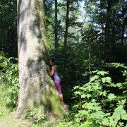 Baum Natur-Verbindung